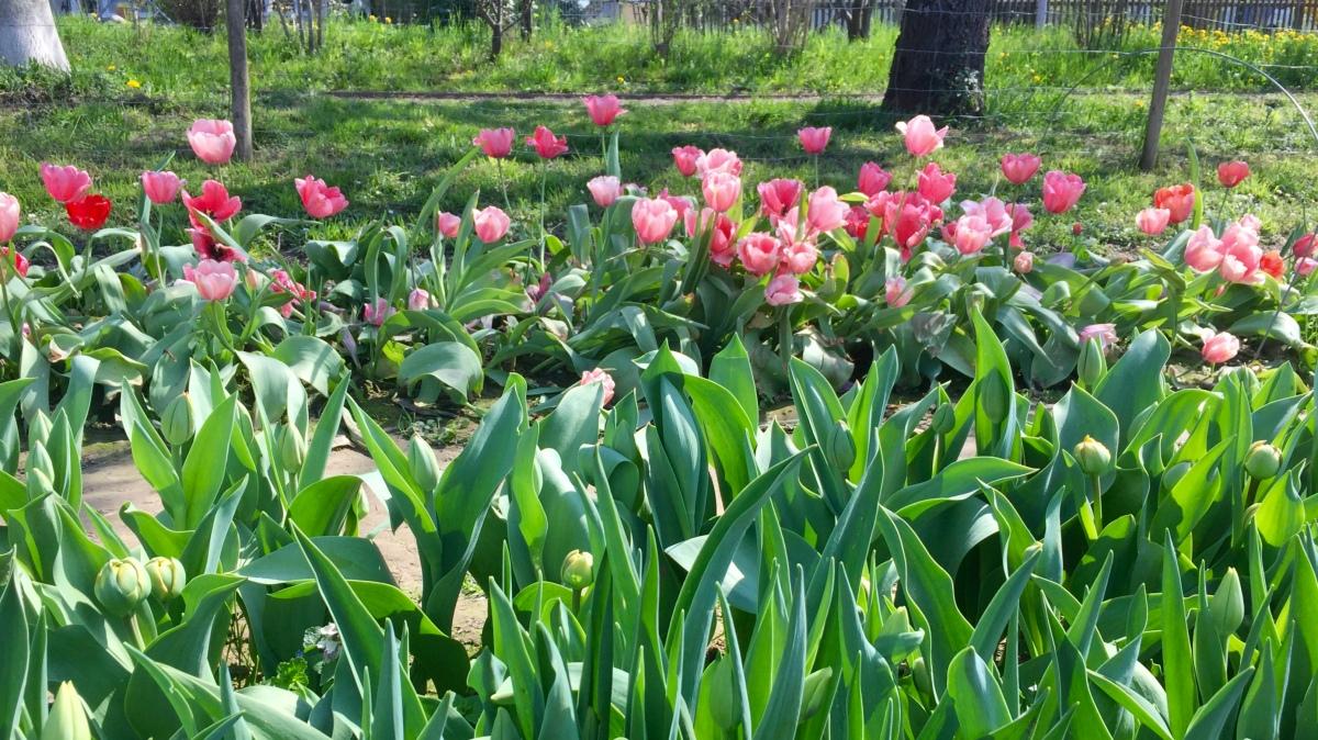 Pick Pretty Flowers